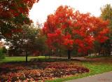 Couleurs_d_automne_au_parc_urbain_de_Jean_Drapeau.jpg