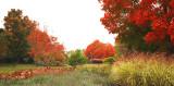 Couleurs_d_automne_au_parc_urbain_de_Jean_Drapeau_2.jpg