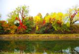 Couleurs_d_automne_au_parc_urbain_de_Jean_Drapeau4.jpg