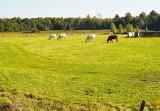 Paysage_rural.jpg