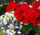 Bouquet_rouge.jpg