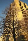L'arbre et l'édifice