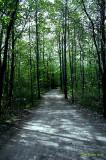 Sentier au Parc Nature (Montréal)