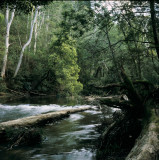 Yarra River Near Warburton