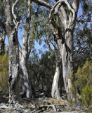 The Victorian Mallee (mostly)