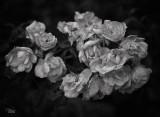 Favourite Monochrome Images