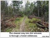 Forest wilderness