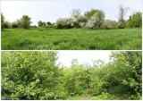 Two views of the conservation area