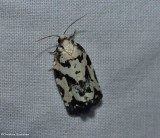 Leafroller moths (Family: Tortricidae) 2753 to 3848