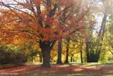 Hillsdale Park