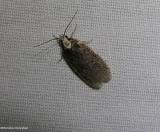Yarrow webworm moth  (Depressaria alienella), #0926