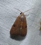 The wedgeling moth  (Galgula partita), #9688