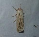Marsh dagger moth (Acronicta insularis), #9280