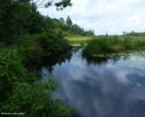 My world - 18:  Marlborough Forest