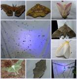 My world - 19: Mothing