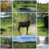 My world - 21:  Larose Forest