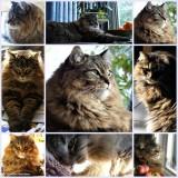 My world - 26:  Cats