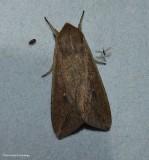 Moths (Order: Lepidoptera) of the Reveler Conservation Area