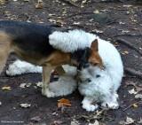 Cleo and Denali