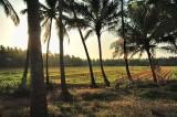 The Goa Fields