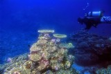 Under the Seas