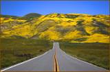 Carrizo Plains Backroad