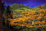 Walker Canyon Wildflowers