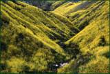 Malibu Mustard Canyon