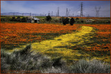 Antelope Valley Backroad