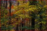 Smokey Mountains Forest
