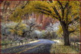 Capitol Reef Autumn Backroad