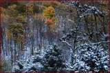 Chappell Autumn Splendor