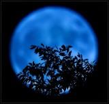 Blue Moon 🌛