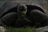 Tortoise Indigestion Heartburn