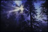 Misty Foggy Starlight
