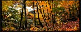 Creekside Autumn