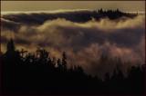 Foggy Headlands