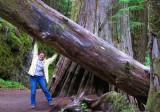 Logging @ Mariposa