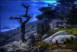 Ghost Tree Big Sur