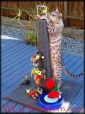 Cat Tower Deluxxxxx