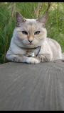 Cross-eyed Feline