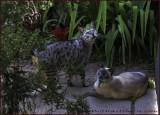 Jaguar & Skippy O