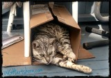 Cardboard Siesta Time