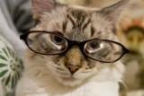 The Specs 😹