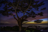 Carmel Cypress SunseTwilight