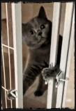 Lock me in??? Uhhhhhhhh NOOOO 🐈