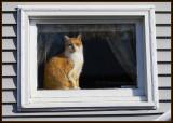 STRAY CAT STRUT 🐈