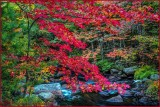 Autumn Creekside Splendor