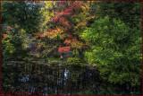 Backwood Reflections