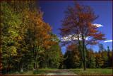 Autumn Backroad